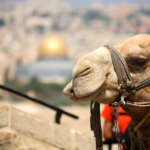 OMEGA Israel Travel by NAFTALI Tours Israel Jordan Egypt Jordanie Egypte Groups Groupes Incoming Tourism Jerusalem Petra Le Caire